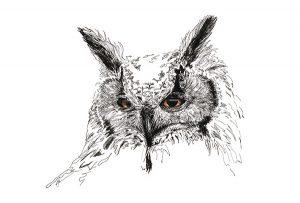 Ingekleurde pentekening van een Bengaalse uil door Adriana Schuurman