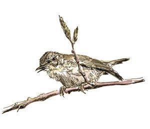 Ingekleurde pentekening van een nieuwsgierig vogeltje door Adriana Schuurman