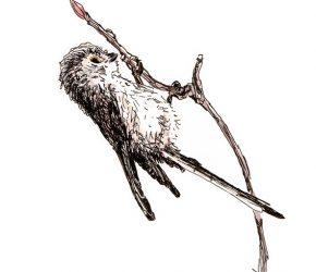 Ingekleurde pentekening van een staartmeesje dat aan een takje bungelt door Adriana Schuurman